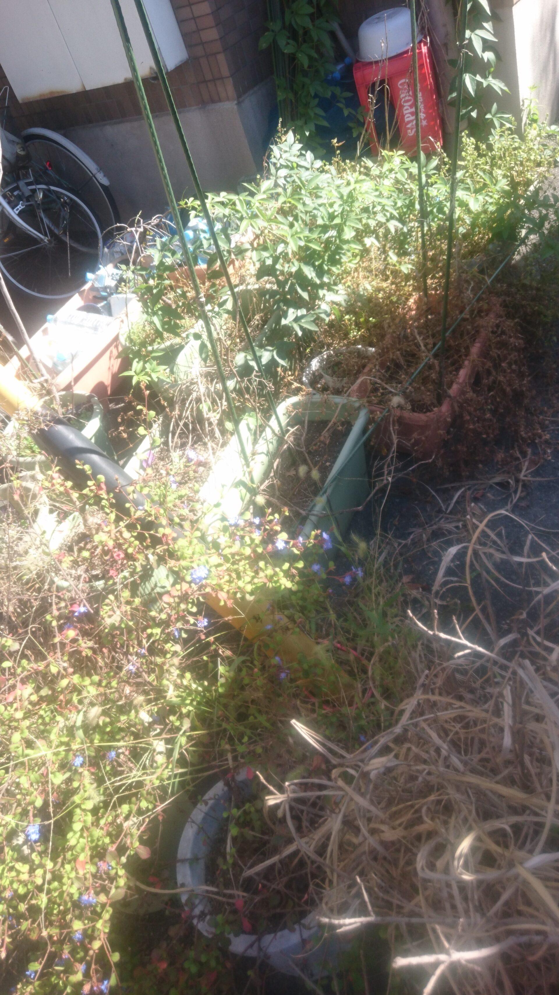 庭周りの清掃と回収作業