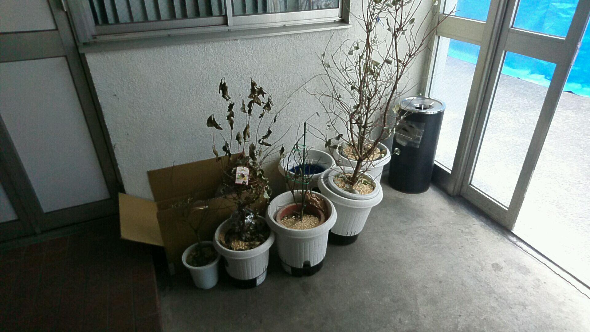 植木鉢の出張回収