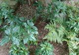 庭の置物の出張回収