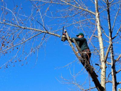 庭の植木を片づけたい!植木や大量の枝木はどうやって処分すればいいの?